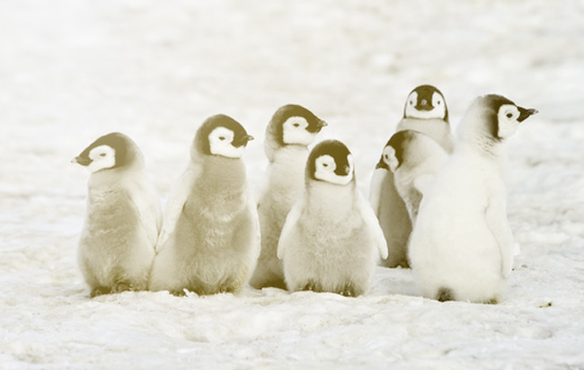 Meet the Penguins: Your Inbound Marketing Marvels