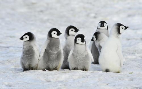 Meet the Penguins: Your Inbound Marketing Marvels